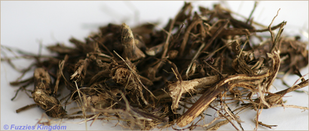 Echinacea root whole