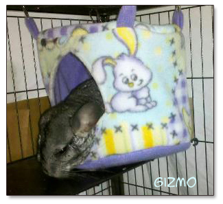 chinchilla sleeping in fleece house