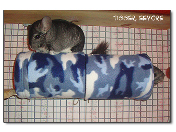 chinchillas in a fleece tube