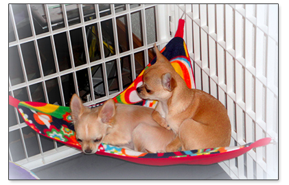 puppies in a hammock