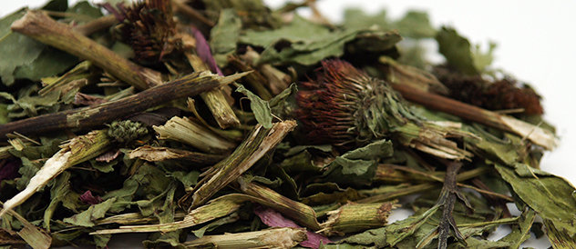 echinacea for rabbits, chinchillas, guinea pigs